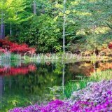 callaway gardens christie dedman