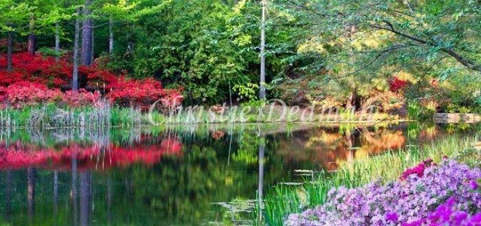 Callaway Gardens Azaleas Pine Mountain Georgia Christie Dedman