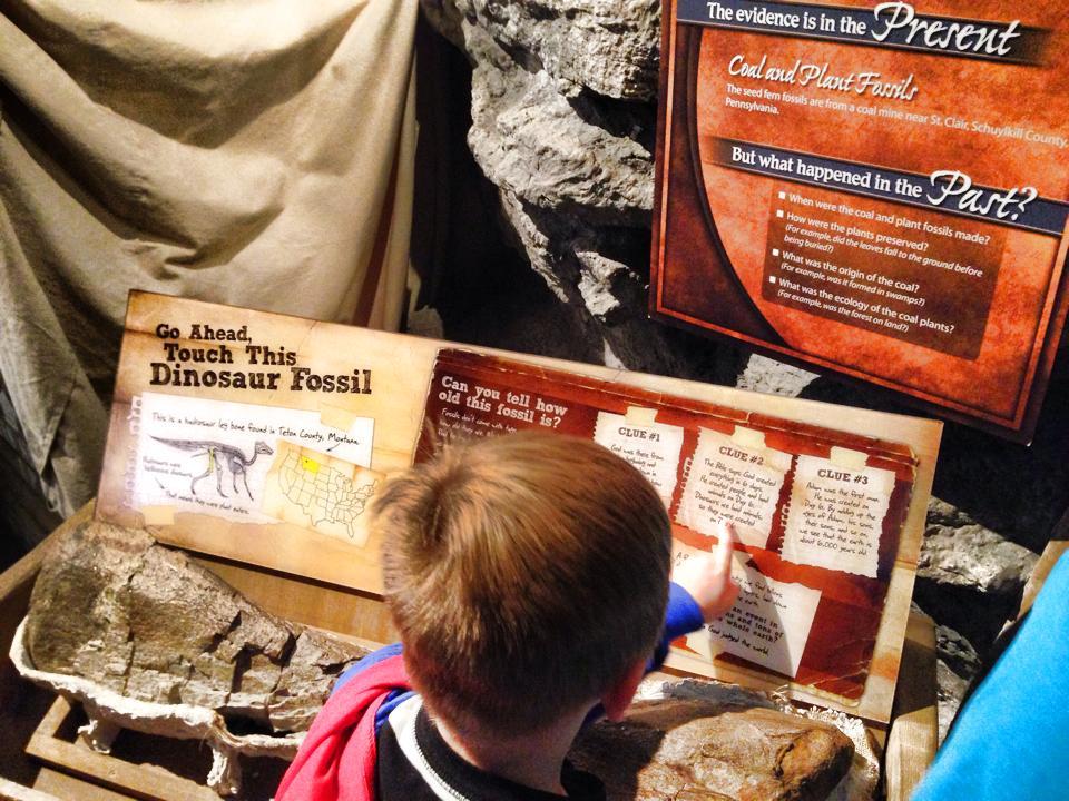 dino fossil area