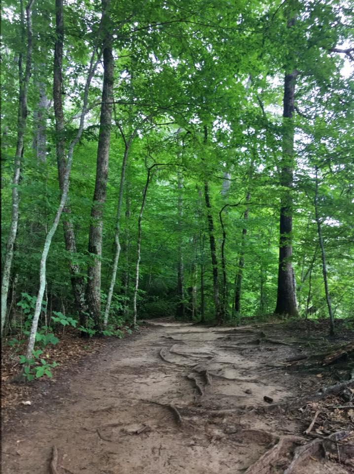 chattahoochee trails dedman