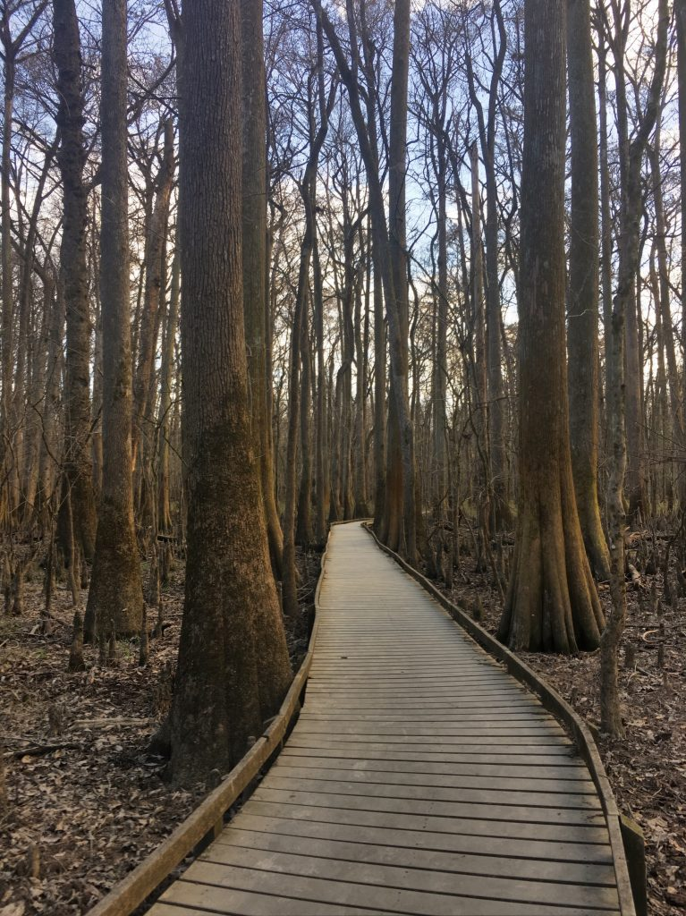 congaree national park dedman 7