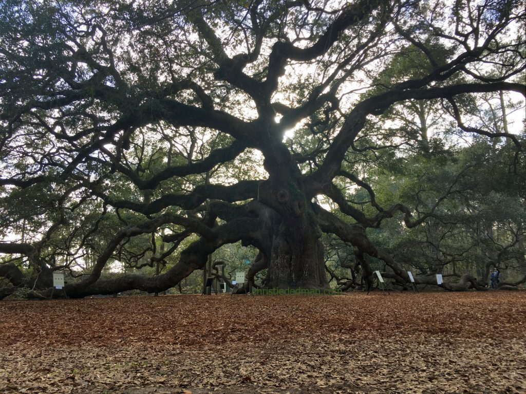angel oak 1 christie dedman