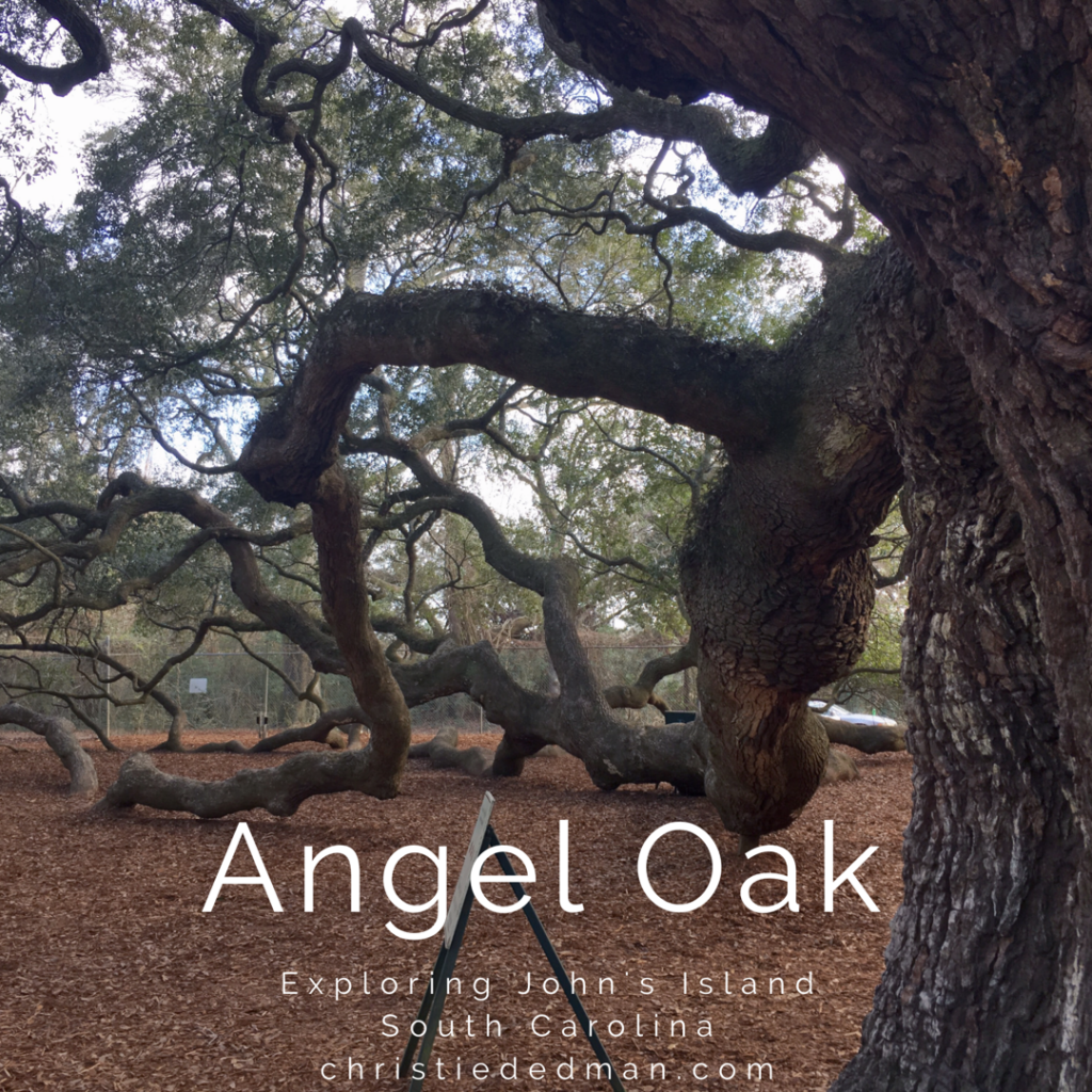 exploring angel oak tree south carolina.jpg